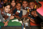 Cat Depot Community Troop Project