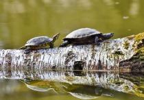 turtles-3289690_1280