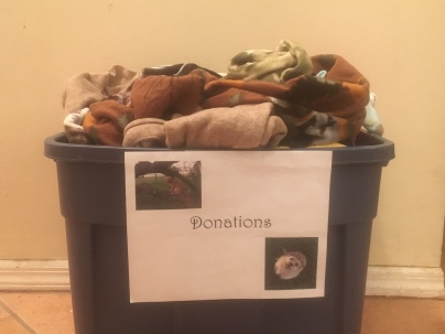 Gold Award Donation Bin